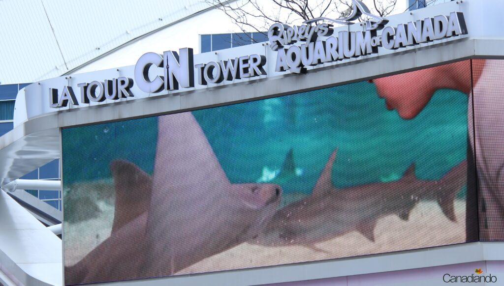 Ripley's aquarium no Canadá