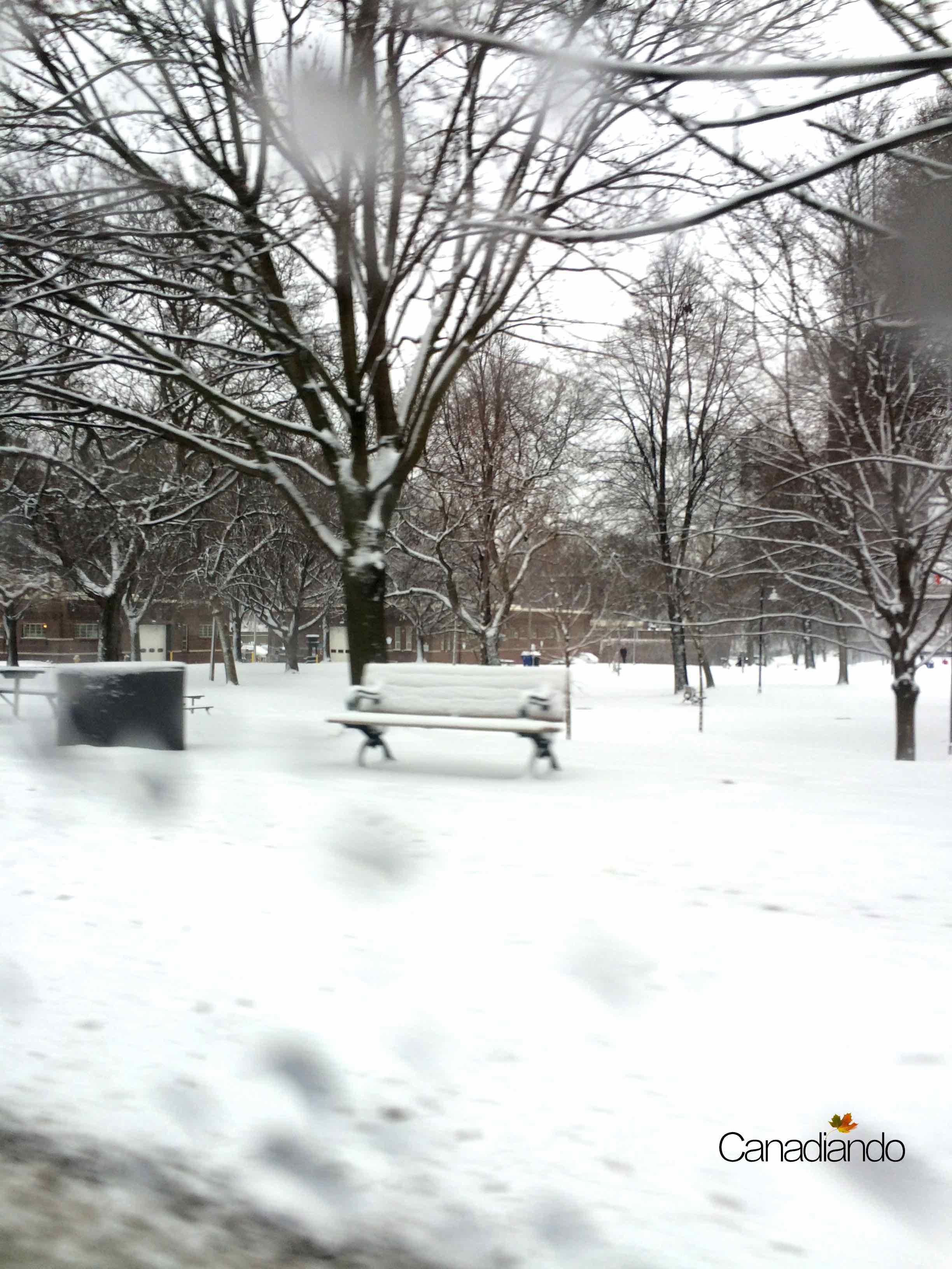A vida continua, ainda que com neve.
